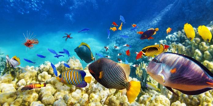 A Grande Barreira de Corais se estende por 2 mil quilômetros